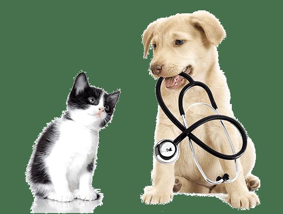 Veterinary Surgery Surgery Vets In Tulsa Surgery Vets