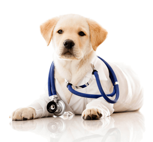 Our Pricing Information | Tulsa Vet Prices | Prices for