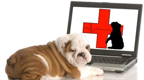 Tulsa Online Animal Pharmacy