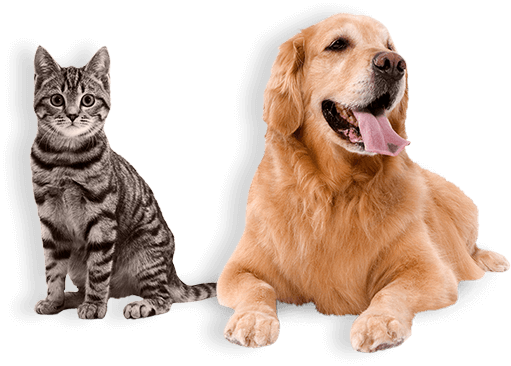 Financial Help for Your Pet | Affordable Vets Near Me