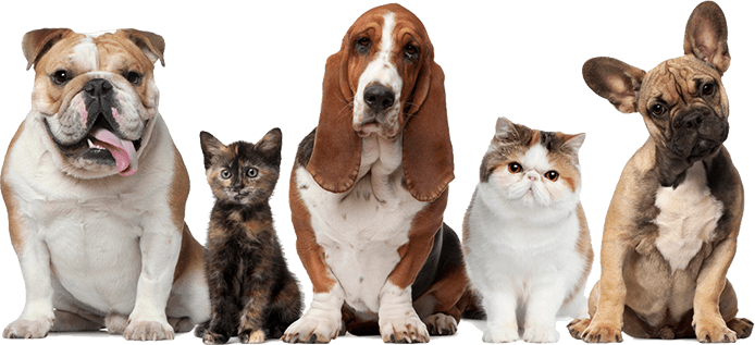 Tulsa Pet Boarding   Tulsa Pet Grooming   Kindness Animal