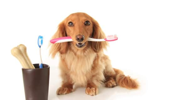 pet dental care Tulsa